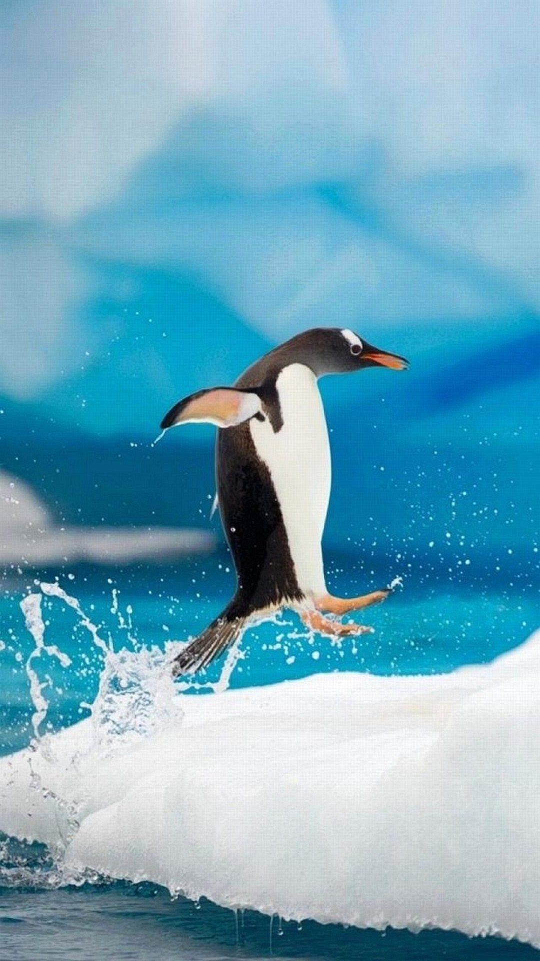 Penguin iPhone 7 Plus Wallpaper iPhoneWallpapers Penguins 1080x1920
