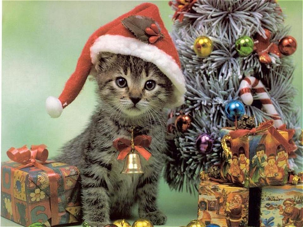 Animals and Christmas Animal Space 1024x768