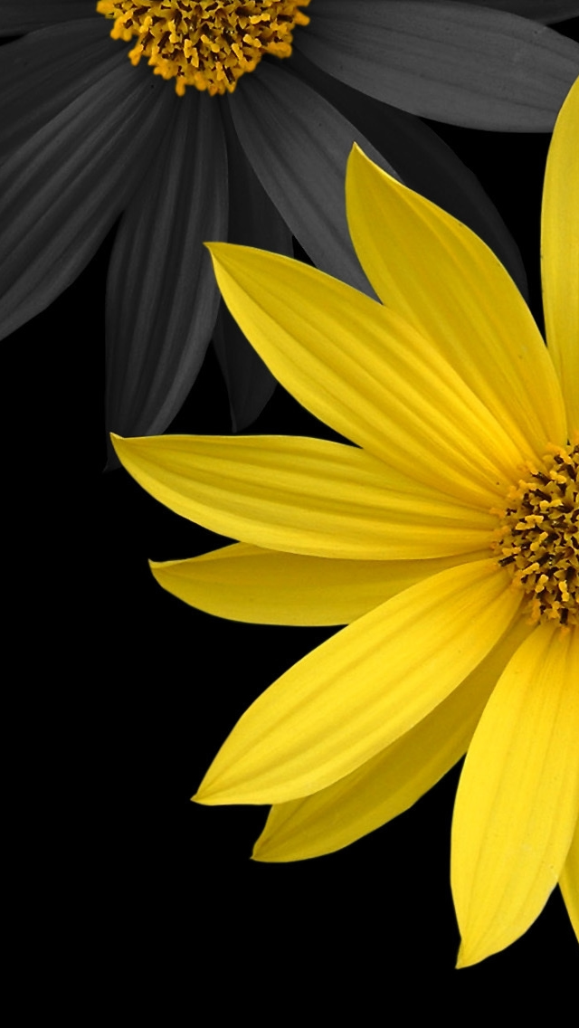flowers more search simple flower iphone wallpaper tags black flower 640x1136
