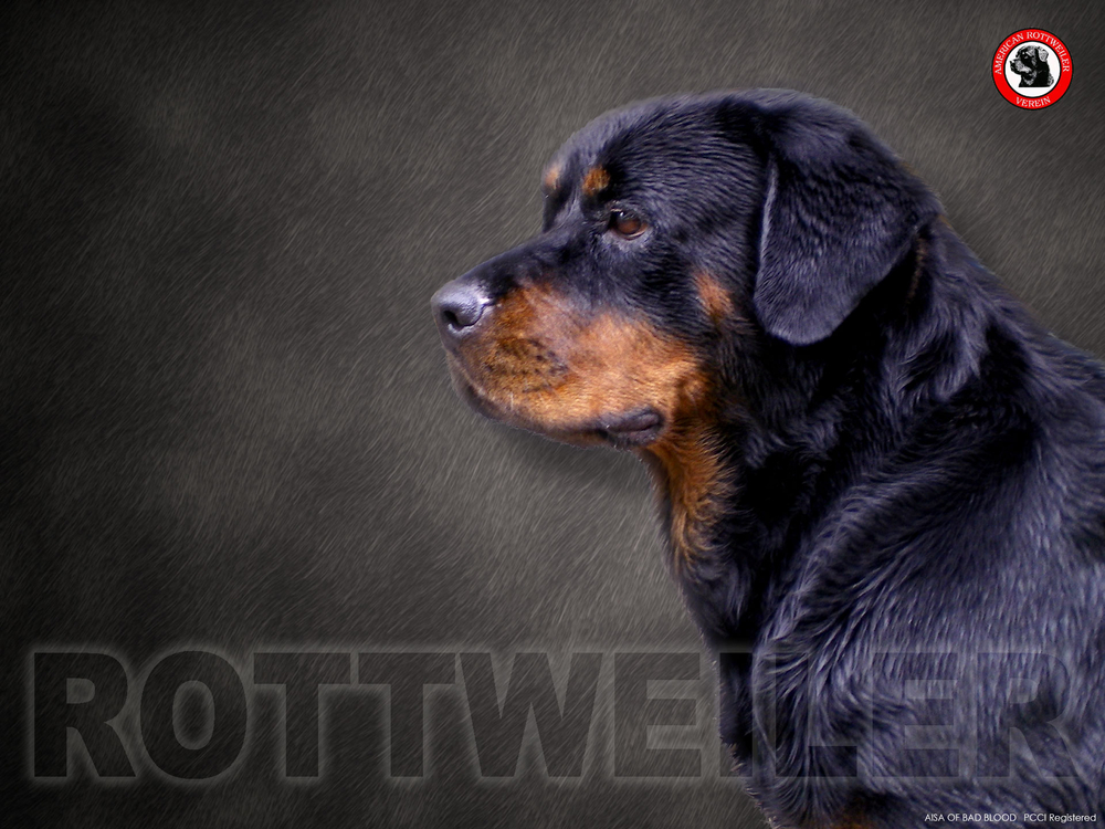 Rottweiler Wallpaper for My Computer - WallpaperSafari