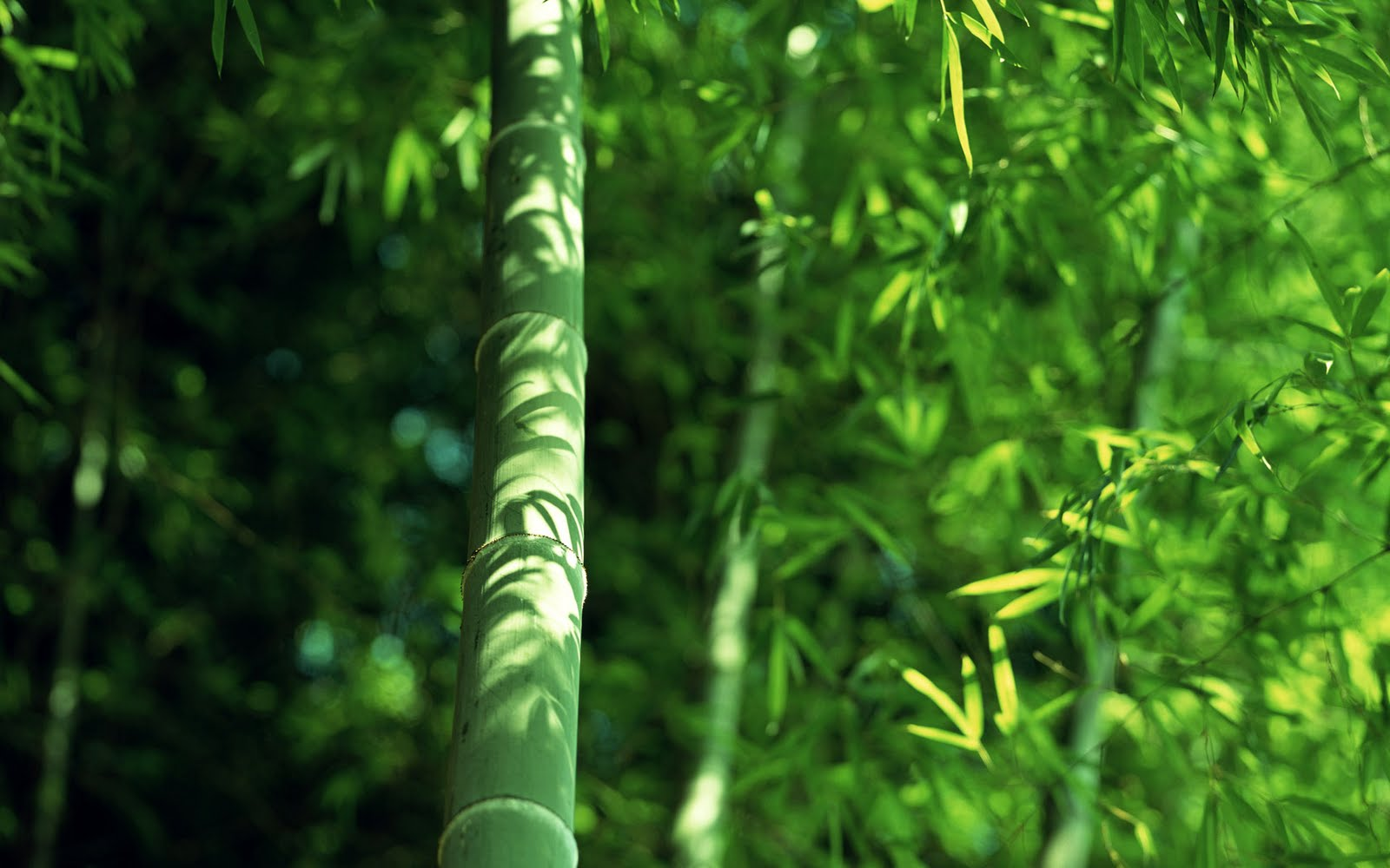 High Definition bamboo design wallpaper bamboo pattern wallpaper 1600x1000