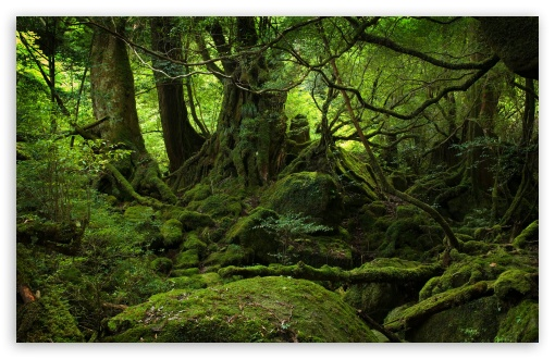 Rainforest HD Desktop Wallpaper High Definition Fullscreen 510x330
