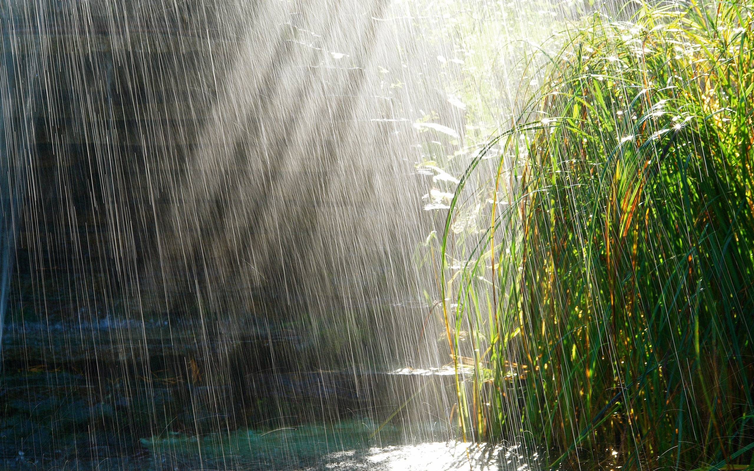 Rainy Day Backgrounds 2560x1600