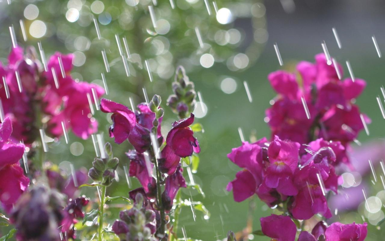 Free April Showers Wallpaper Wallpapersafari