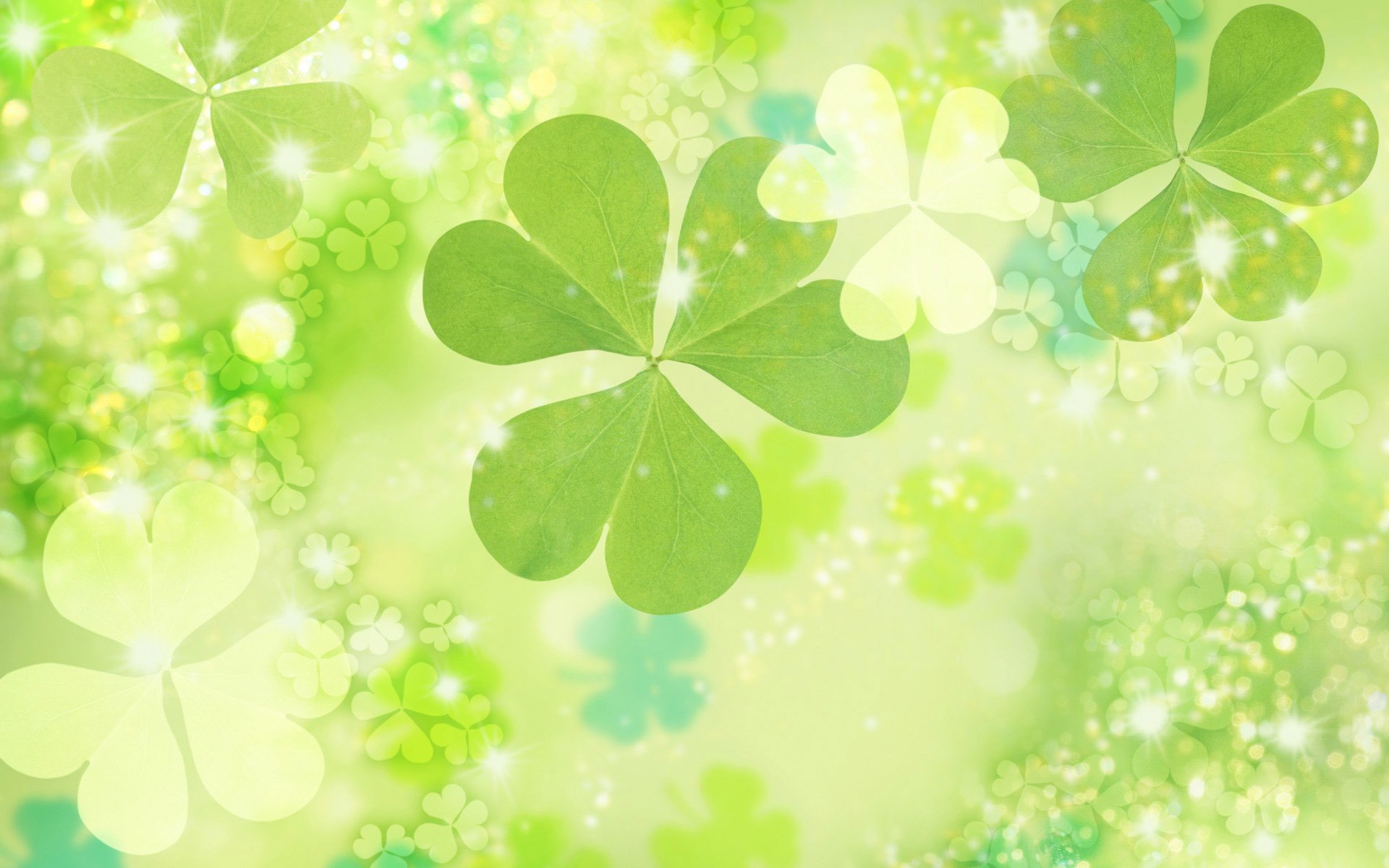 Clovers wallpaper 711 1920x1200