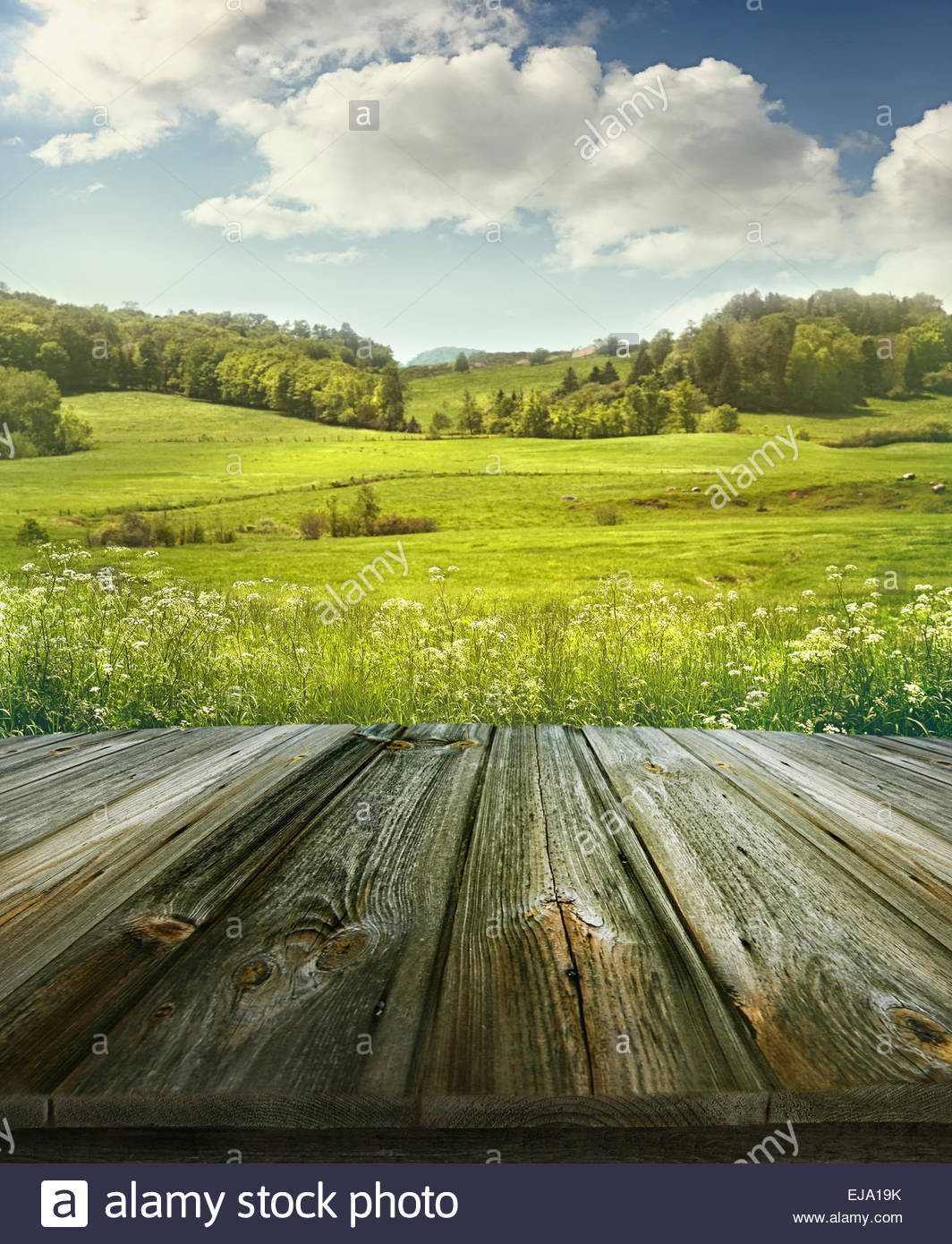 Summer pastoral background with wooden planks Stock Photo 1064x1390