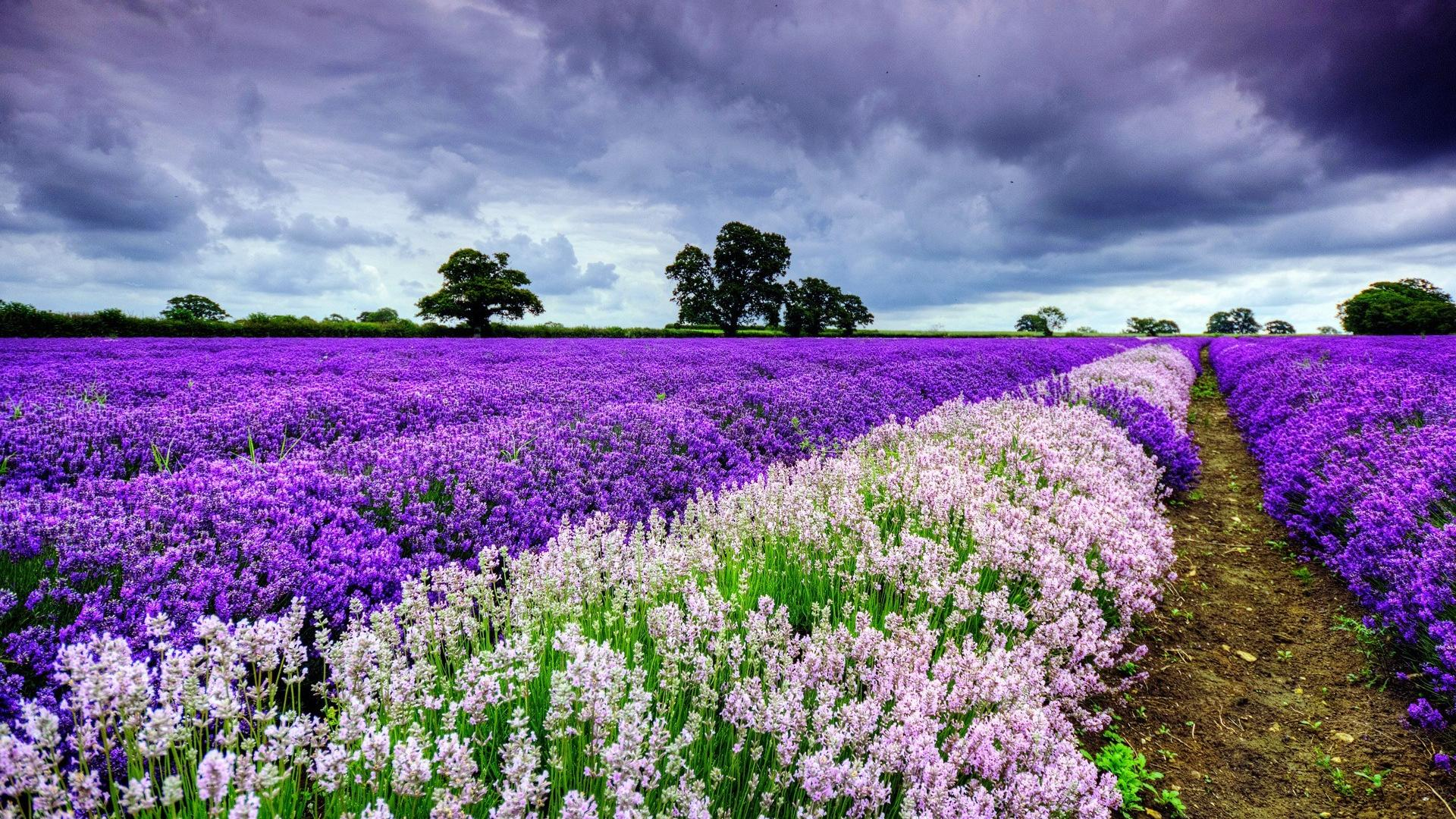 Spring Wallpapers   Top Spring Backgrounds   WallpaperAccess 1920x1080