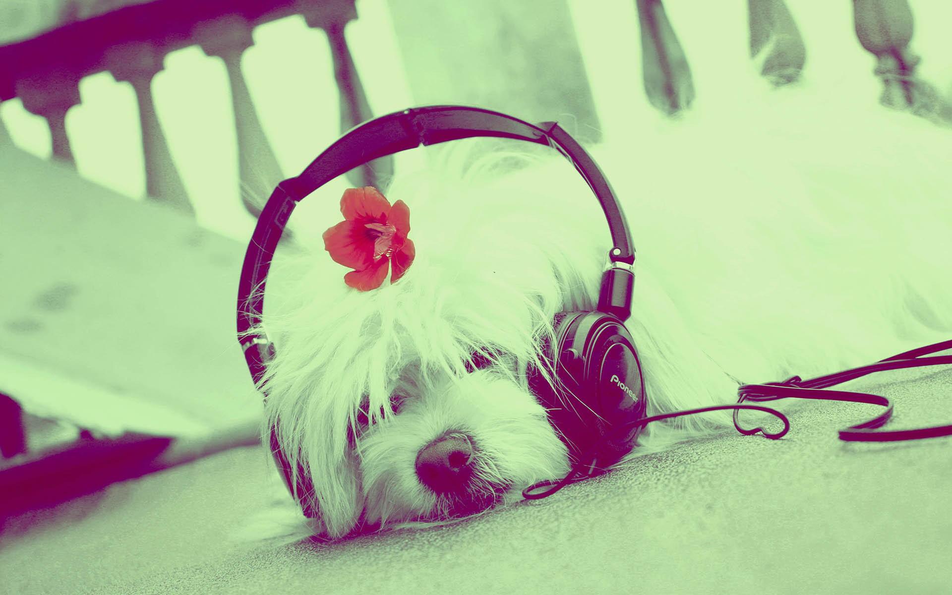 Cute Music Wallpaper - WallpaperSafari