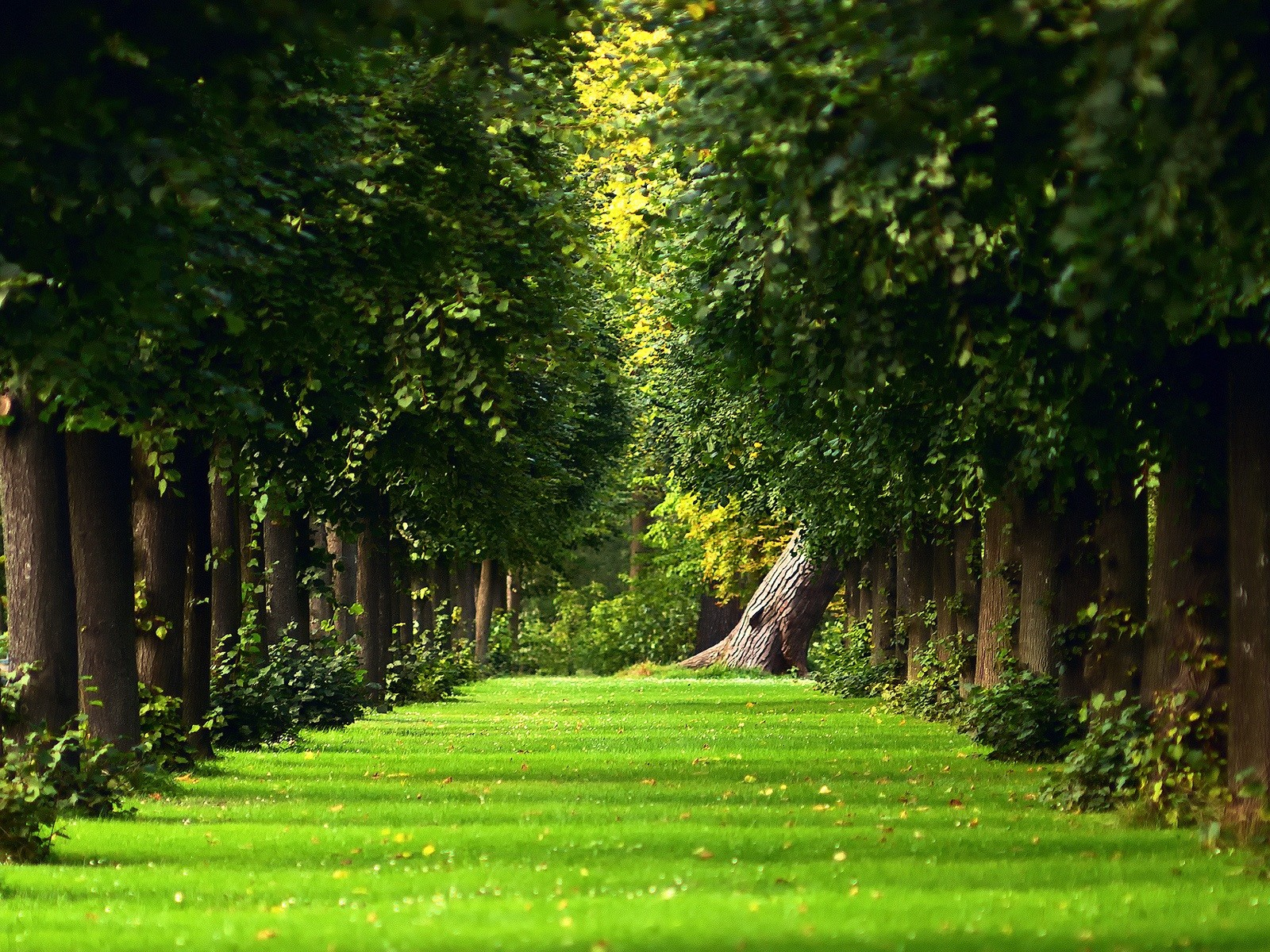 Download Beautiful Green Garden Wallpaper Full HD Wallpapers 1600x1200