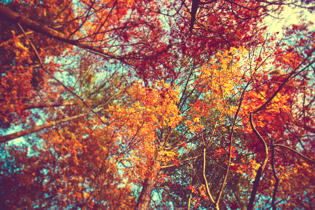 autumn leaves wallpaper by venomxbaby 1024x683