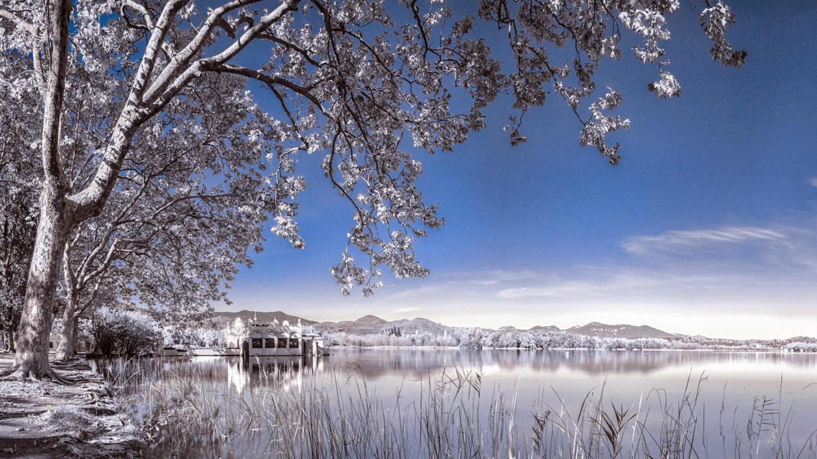 WinterScene Wallpaper Background Snow22jpg 1600x900