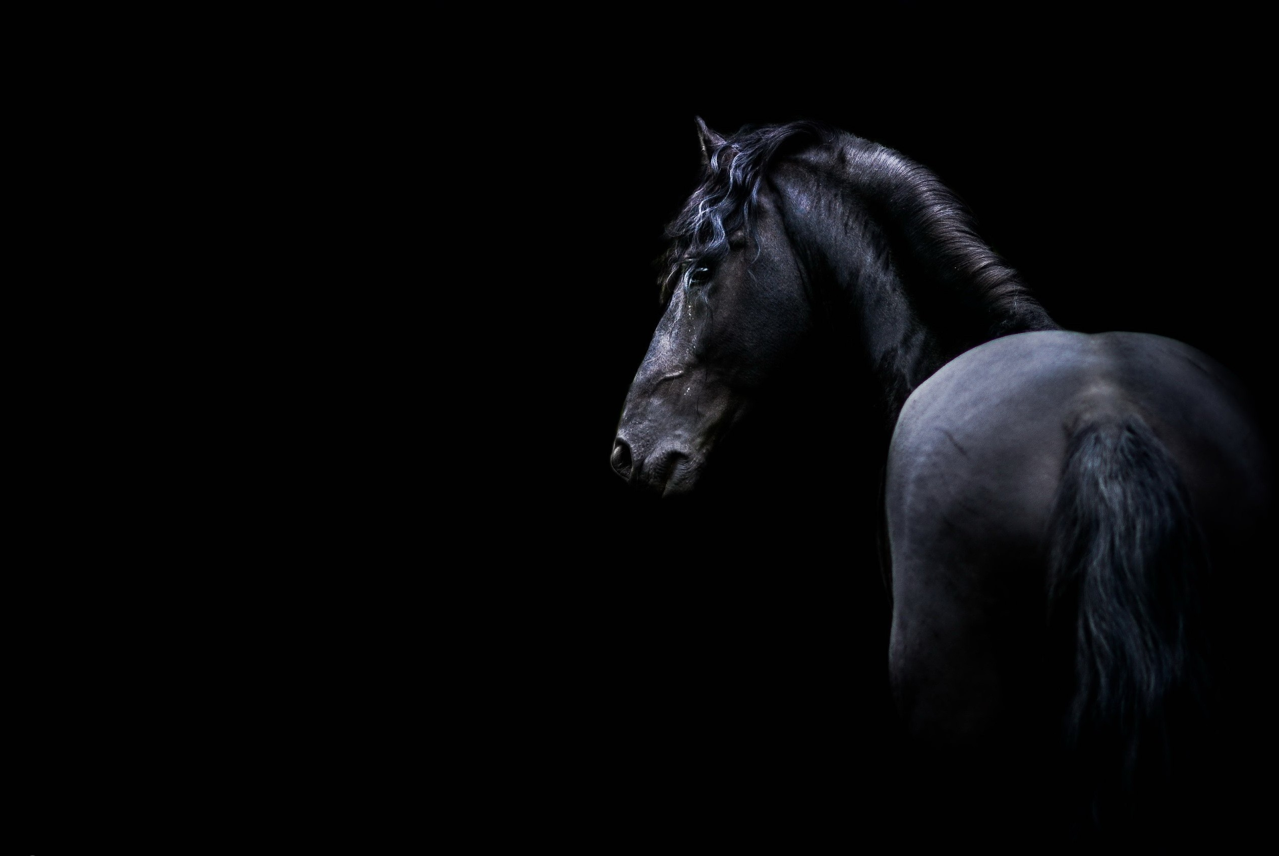 Free Download 60 Dark Horse Wallpapers On Wallpaperplay 2536x1697 For Your Desktop Mobile Tablet Explore 37 Blackhorse Wallpaper Blackhorse Wallpaper
