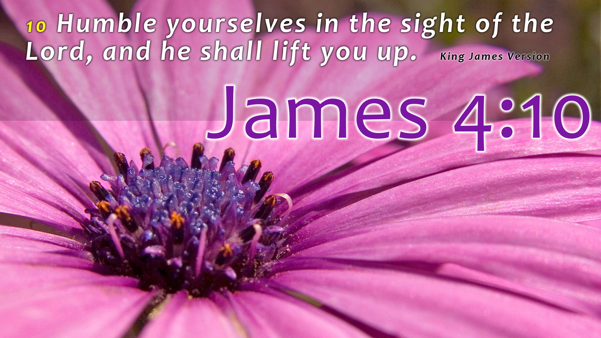 Group Of King James Bible Scripture Wallpaper
