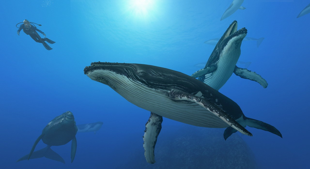 Endless Ocean 2 Whales Wallpapers Desktop Whales Whales Whales 1280x701