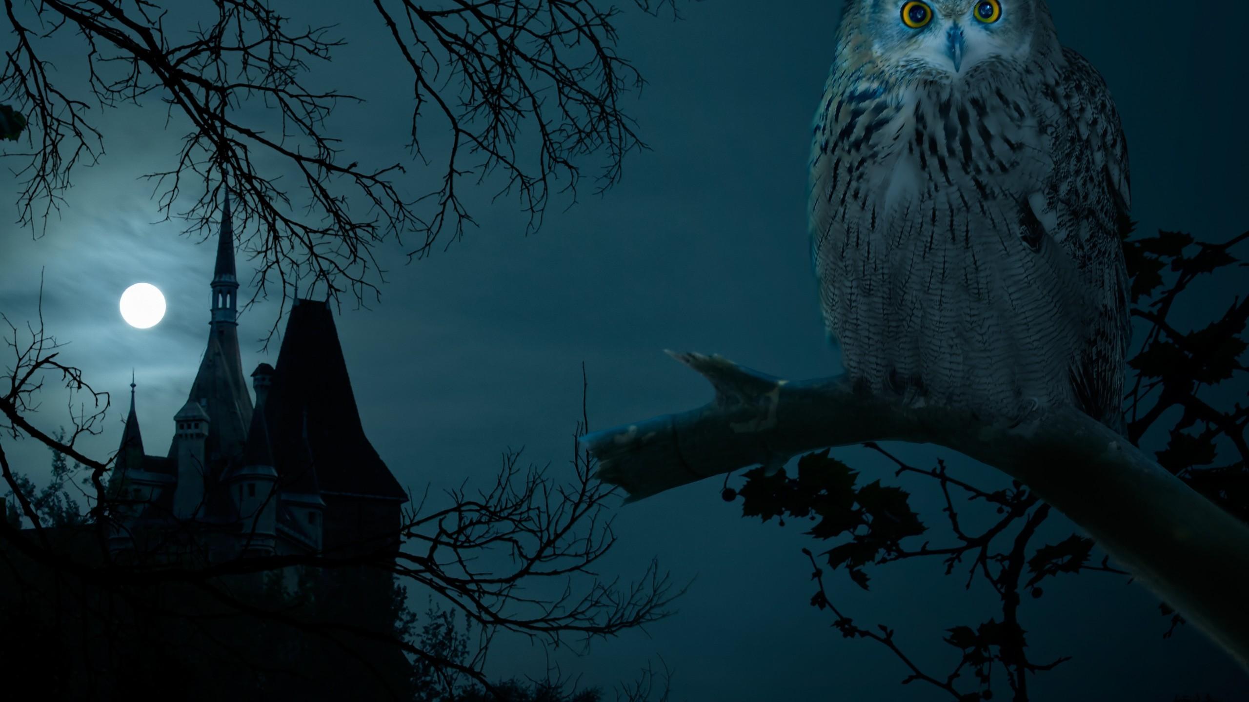Halloween Night Owl Hounted Wallpapers HD 4k High Definition 2560x1440