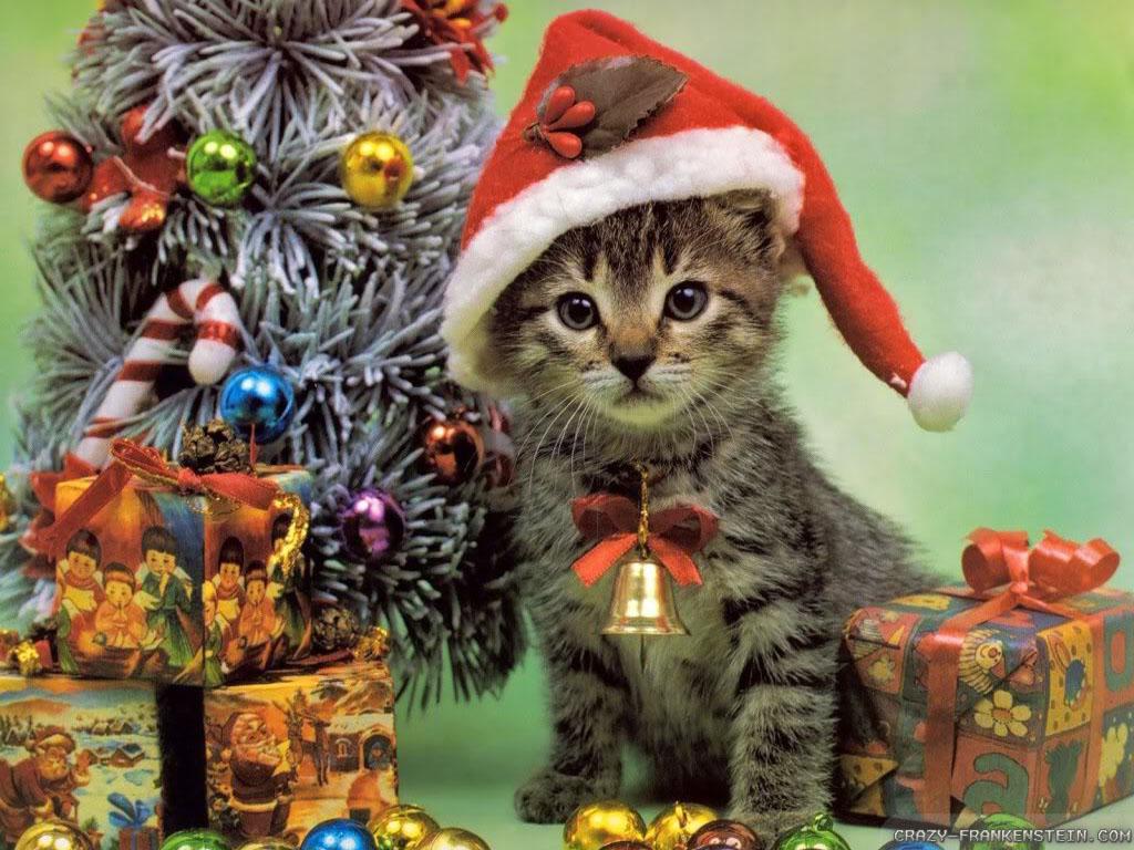 Christmas Kitten   Cats Wallpaper 36711832 1024x768