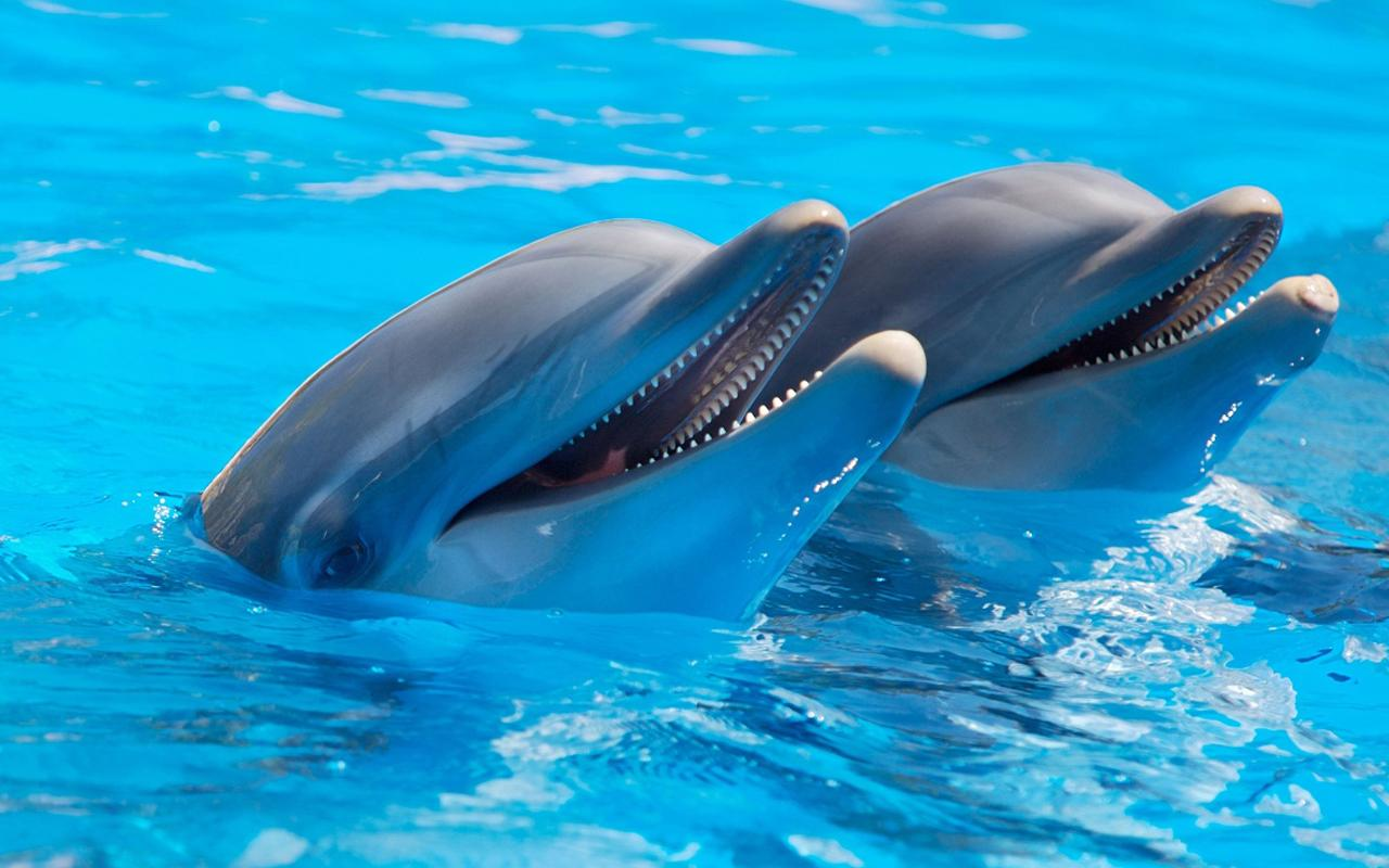 Dolphin Live Wallpaper   Android Apps on Google Play 1280x800