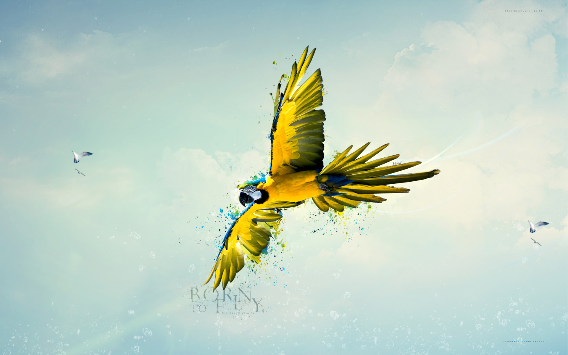 Fly Wallpapers and Background Images   stmednet 1920x1200
