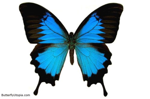 Gallery For Cool Butterfly Backgrounds 500x330