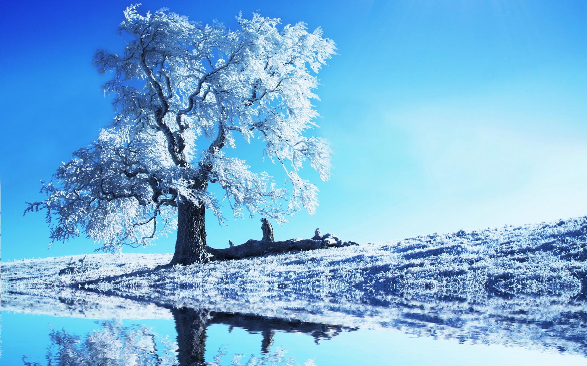 ] Ch Hnh Nn Tuyt Snow Wallpapers HD Full HD 4K 1920x1200