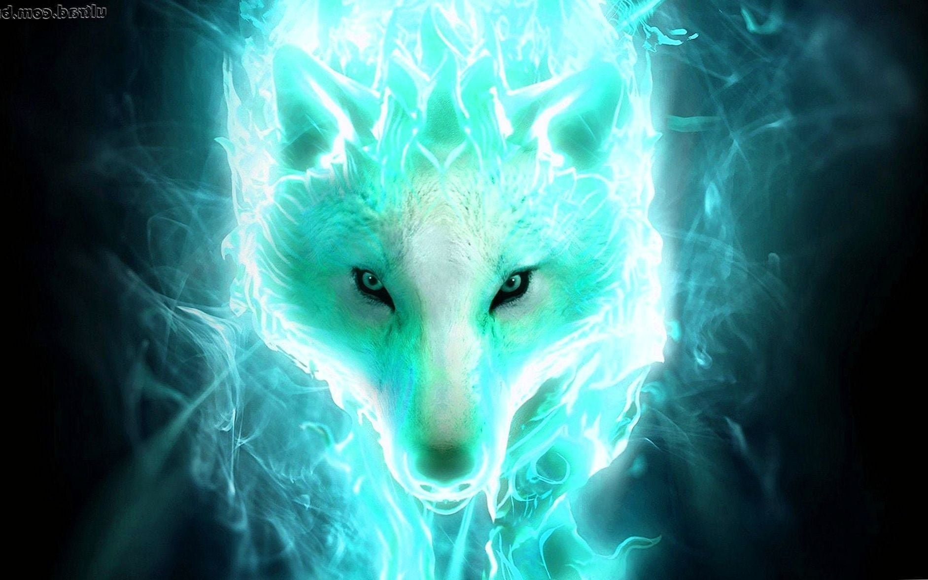 Wolf Spirit Animal Wallpapers   Wolf WallpapersPro 1883x1176