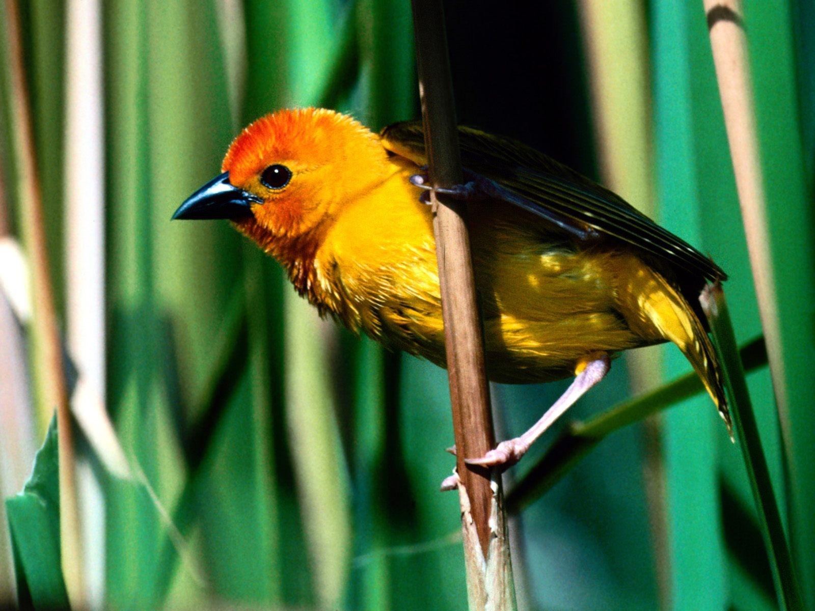 HD Nice Yellow Small Bird Wallpaper HD Wallpapers 1600x1200
