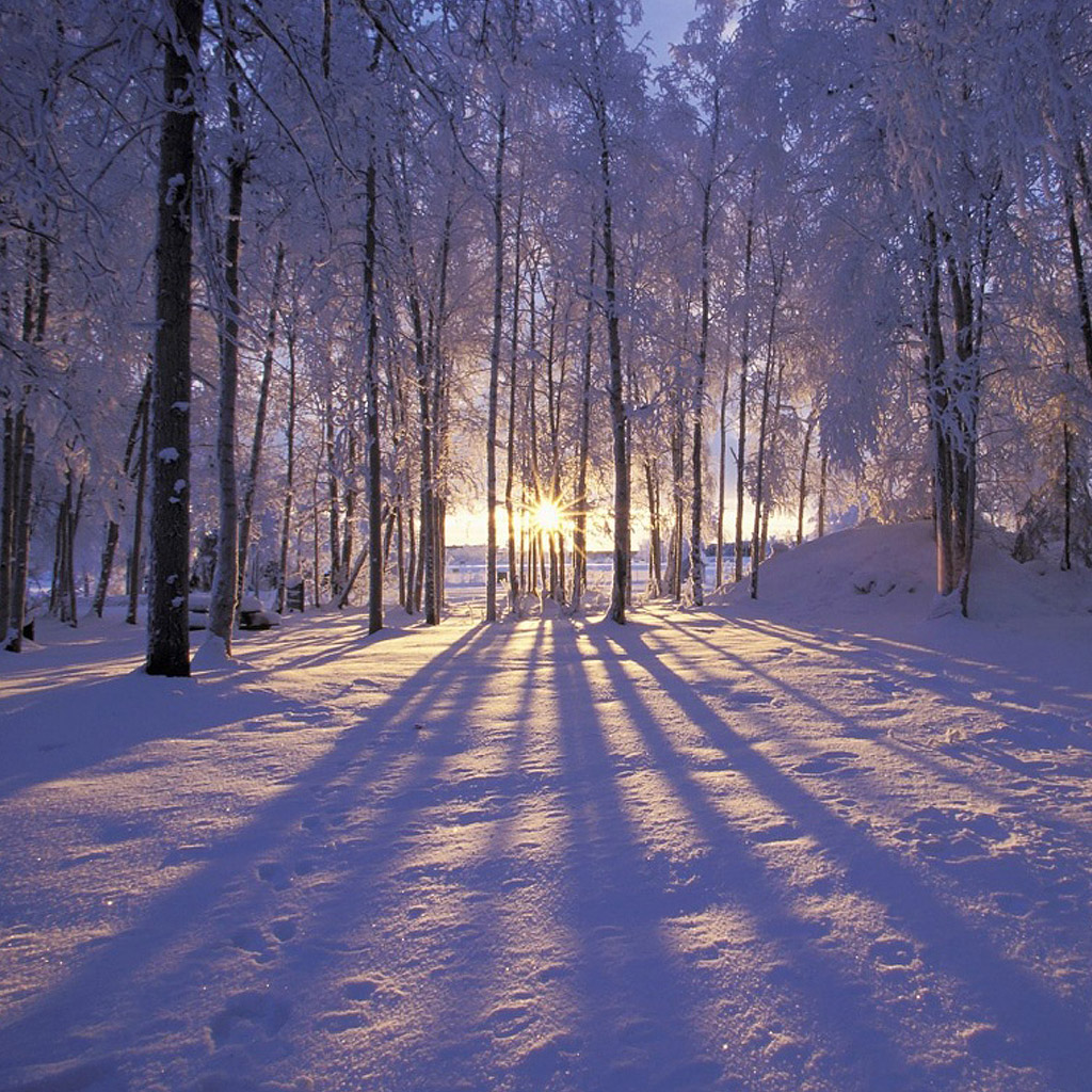 FREE Wallpapers for iPad Winter snow forest 1024x1024