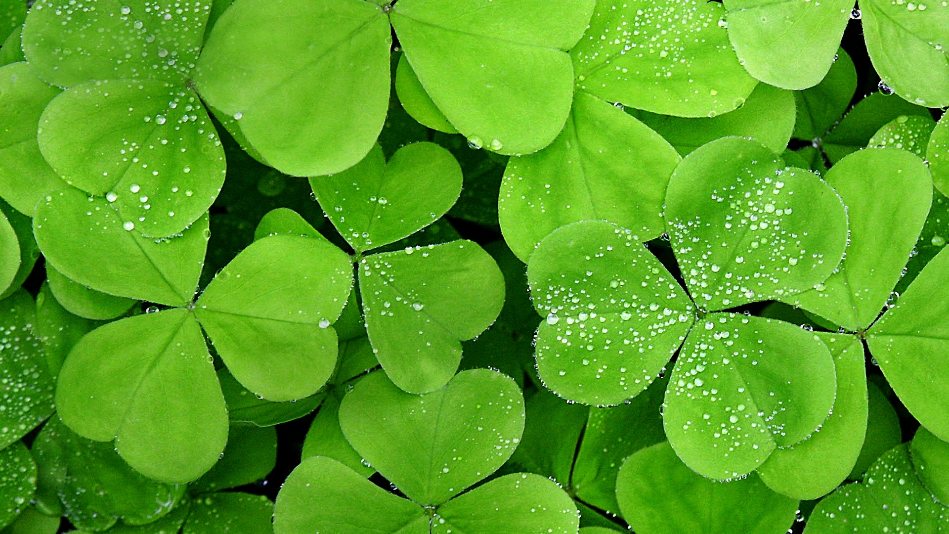 Leaf Wallpapers 70574 1920x1080