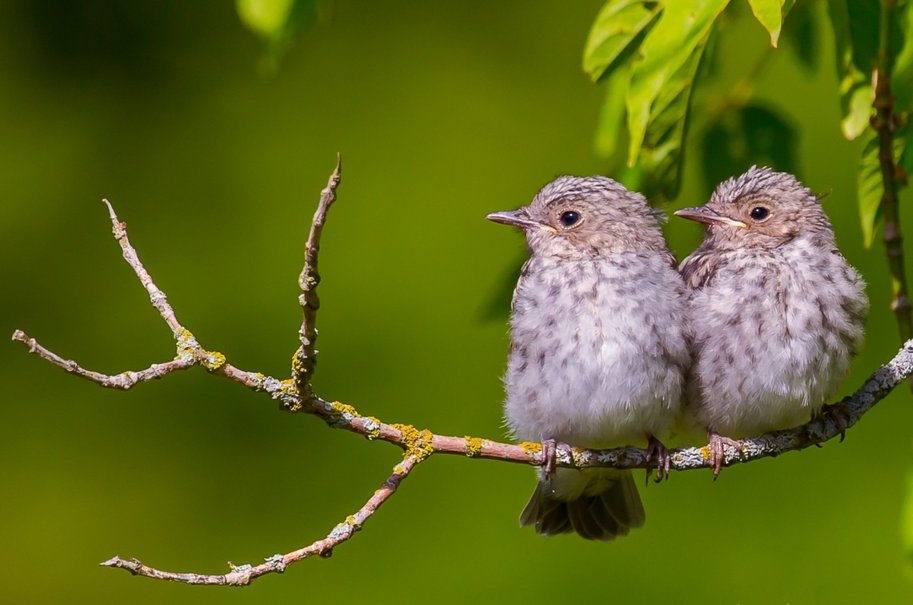 Two gray birds on a branch wallpaper   ForWallpapercom 913x605
