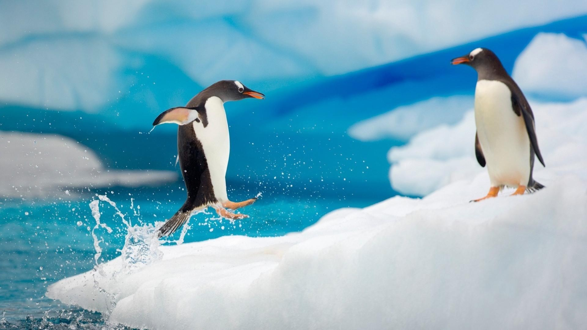 67 Baby Penguin Wallpapers on WallpaperPlay 1920x1080