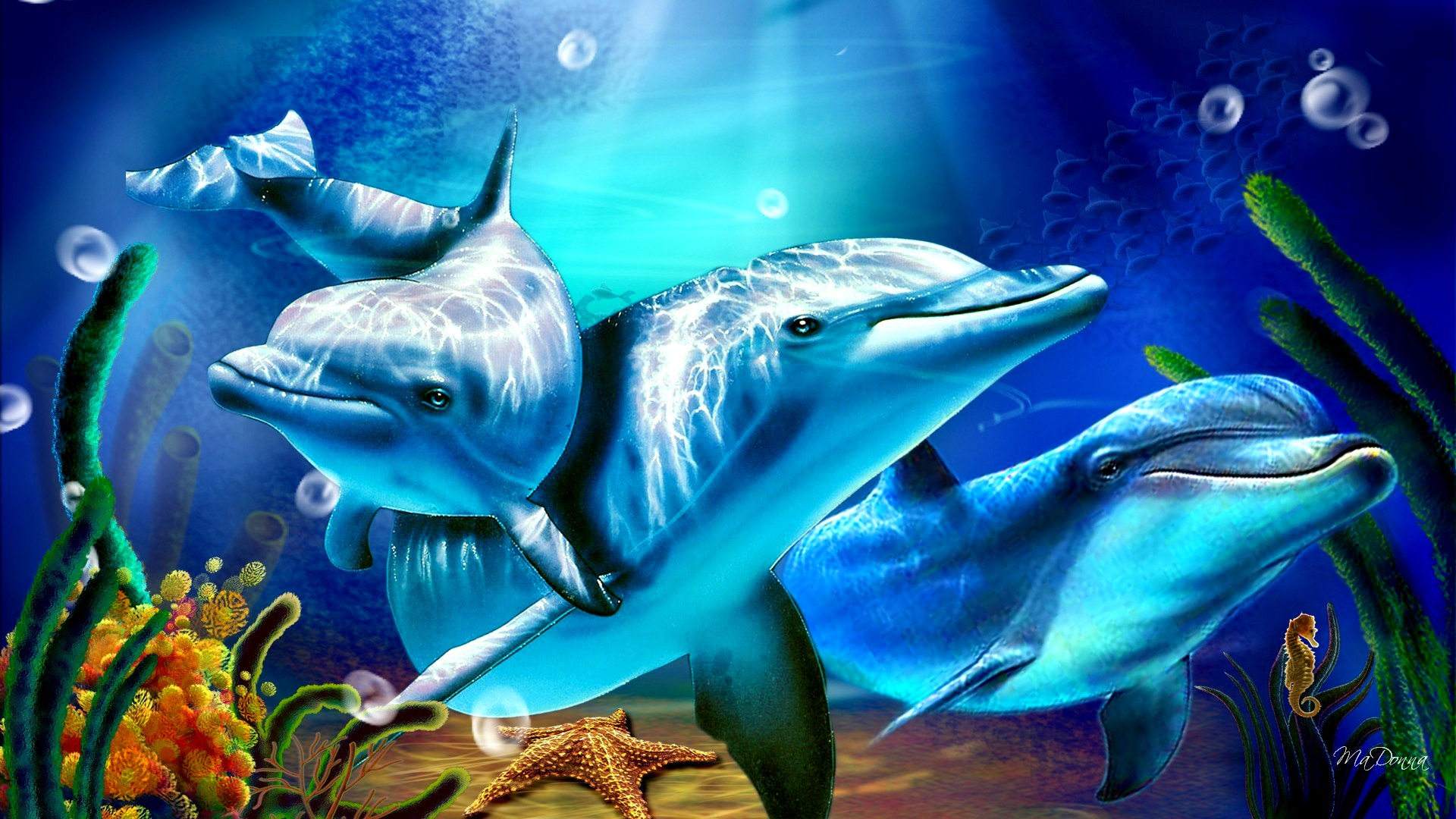 Dolphins wallpapers high definition wallpapers cool nature - Dolphin Sunbeams Exclusive Hd Wallpapers 5879