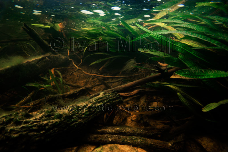freshwater fish wallpaper wallpapersafari