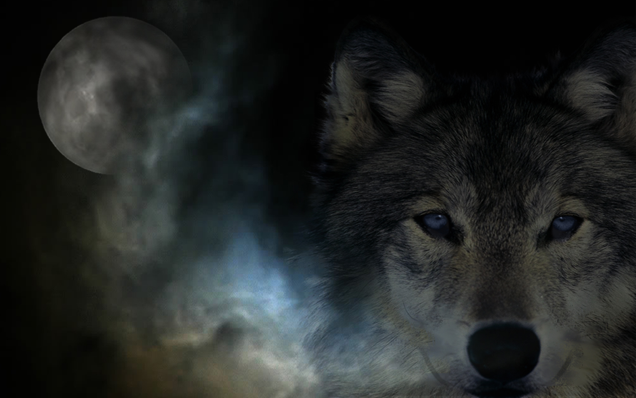 Wolf Background Cool Backgrounds Really Pictures 1280x800