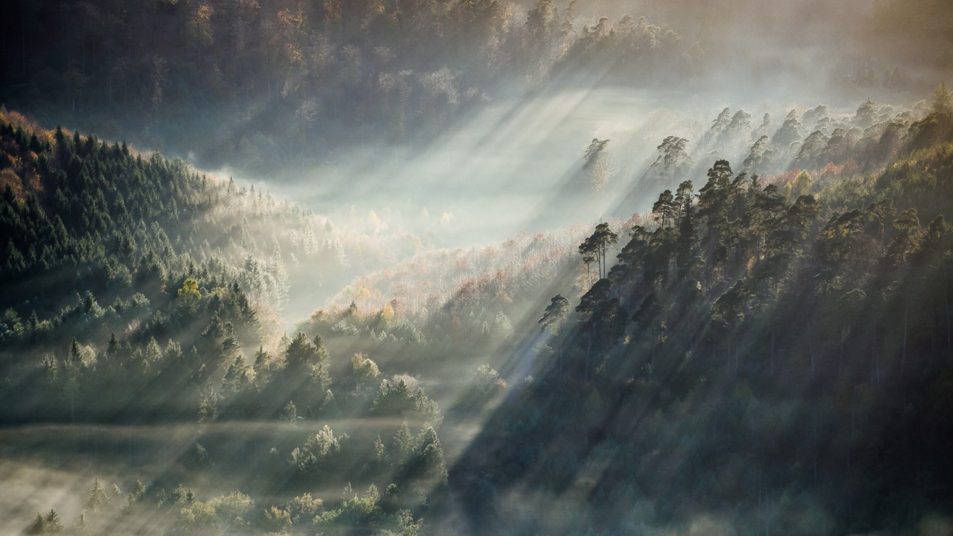 Download Foggy forest wallpaper 1920x1080