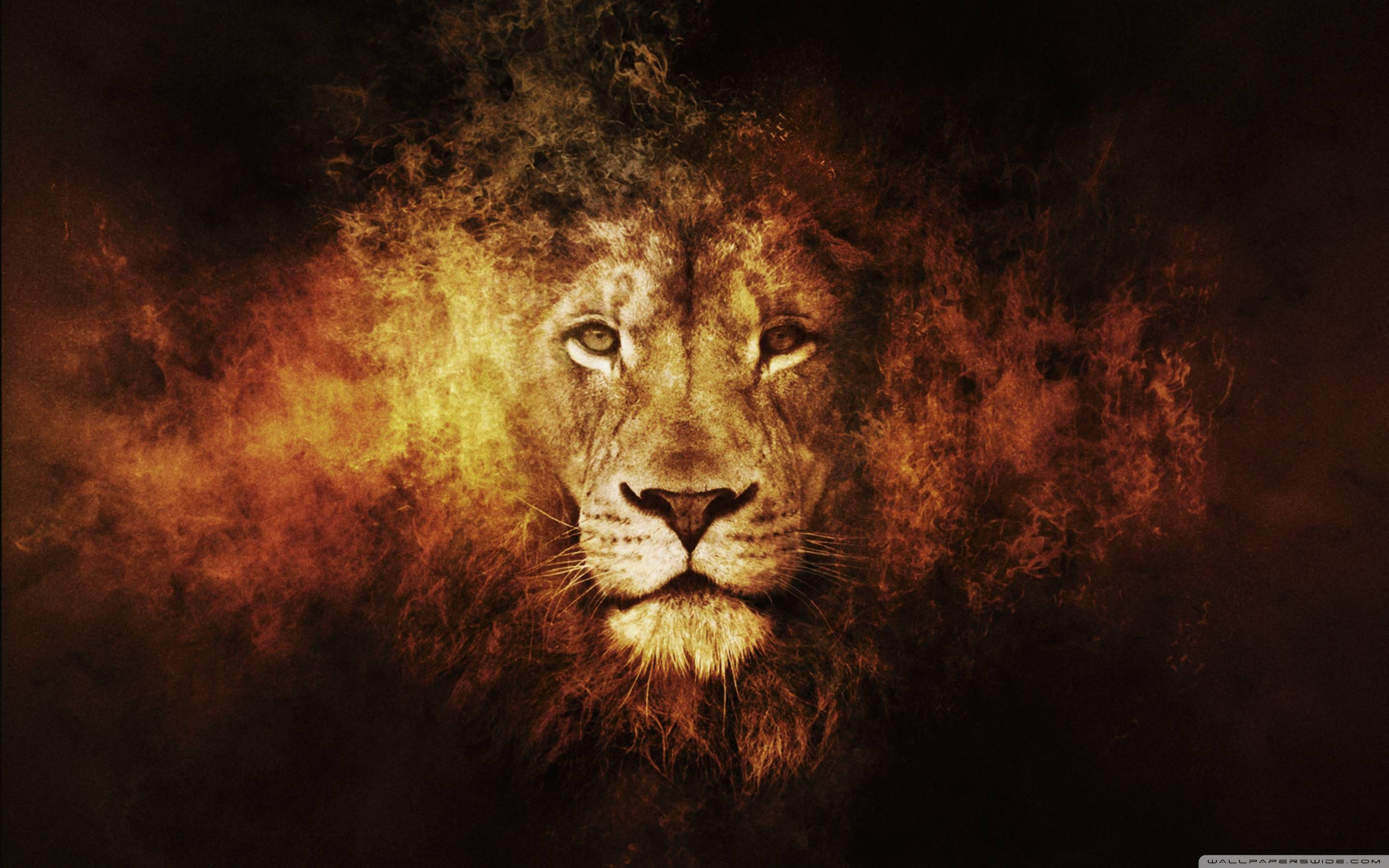 Lion Face Wallpapers 2880x1800