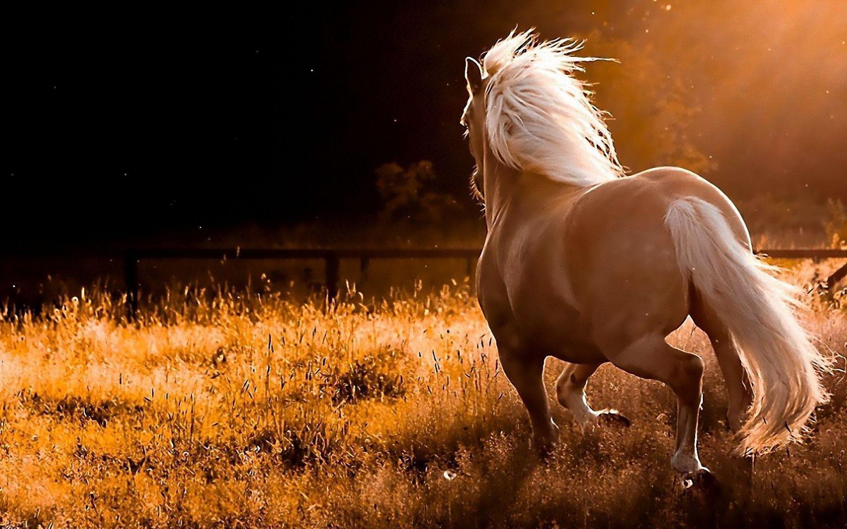 Wild Horses Wallpapers   Top Wild Horses Backgrounds 1680x1050