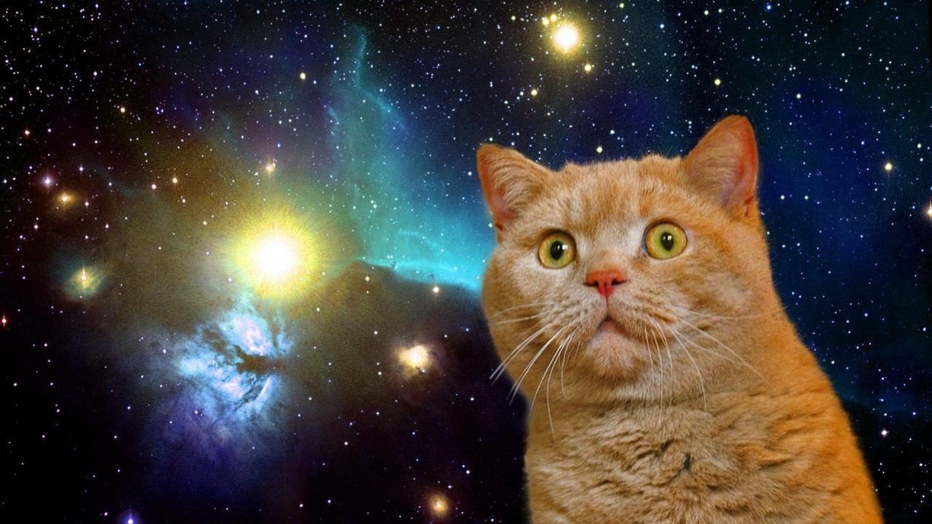 Cat in space wallpaper 1280x783 HQ WALLPAPER   26477 1920x1080