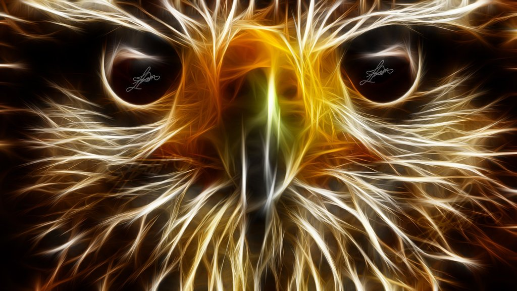 Cool Neon Animal Wallpaper Eagle animal wallpapers hd by 1024x576