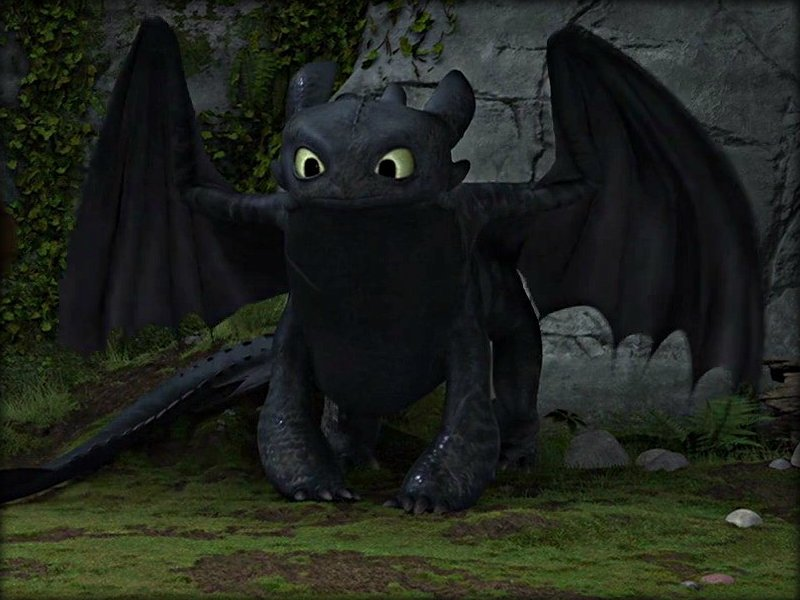 Toothless   Toothless the Dragon Wallpaper 32987031 800x600