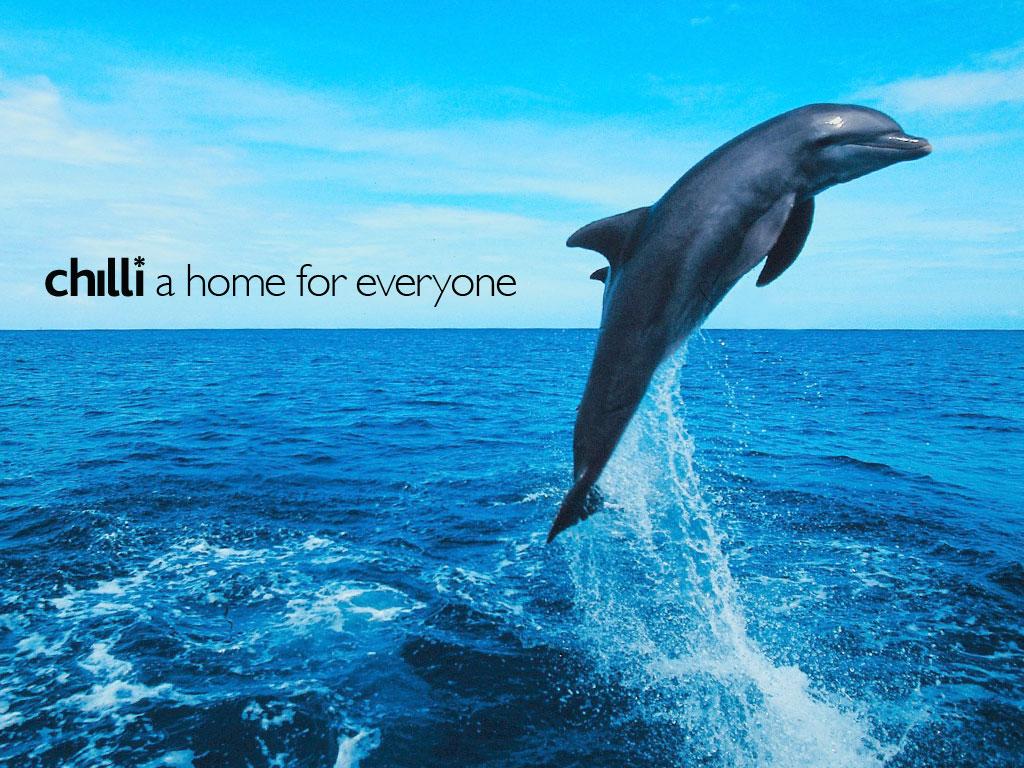 Cute Dolphin Desktop Wallpaper