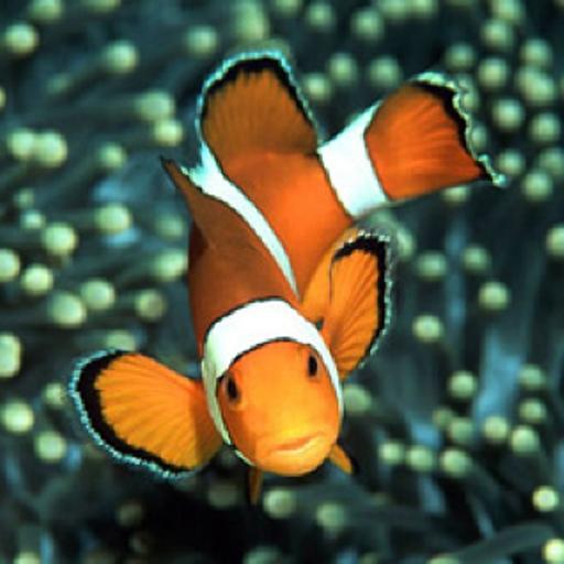 Ocean Marine Underwater Wallpaper Live Images Gallery