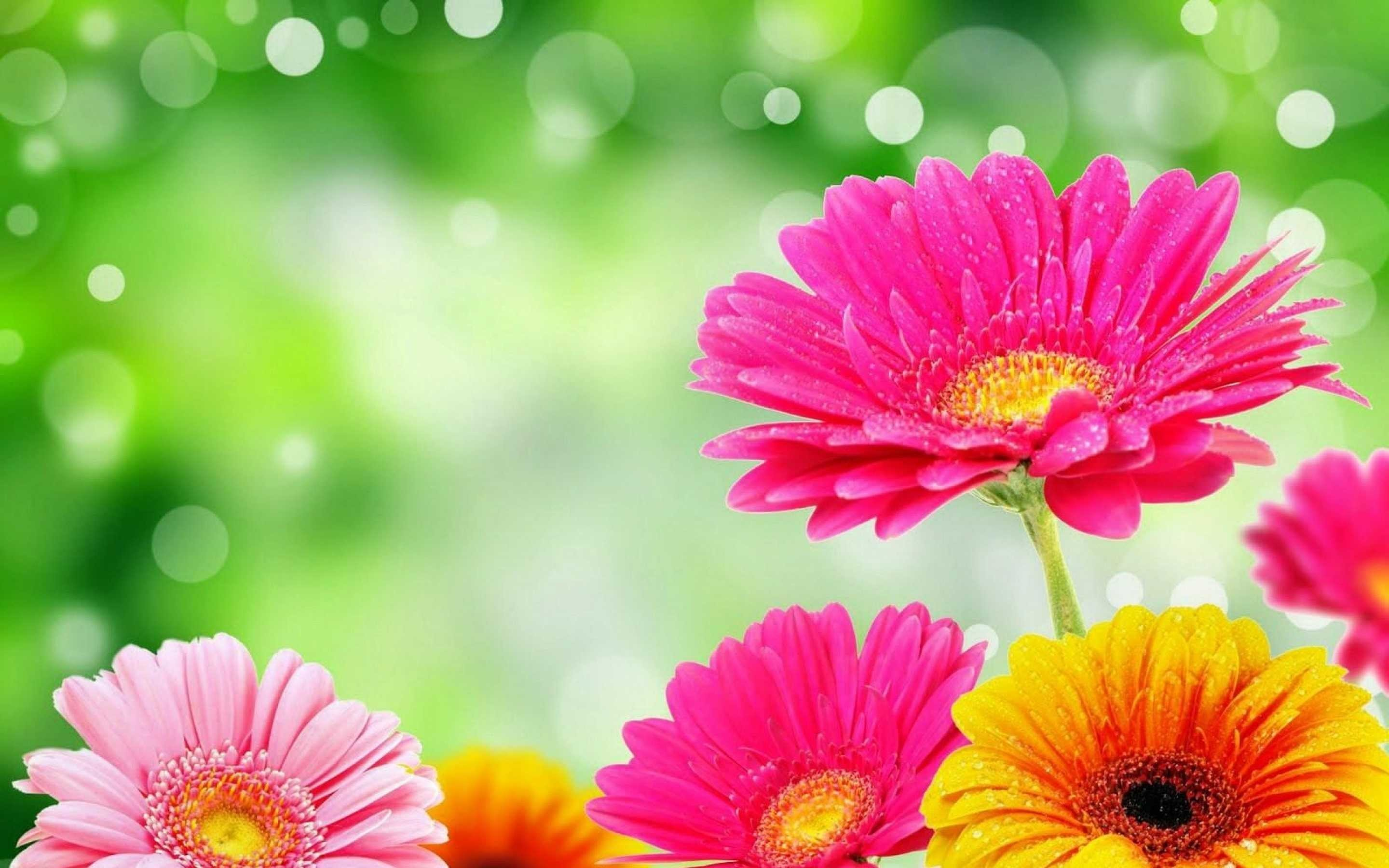 61 Bright Flower Wallpapers on WallpaperPlay 2880x1800