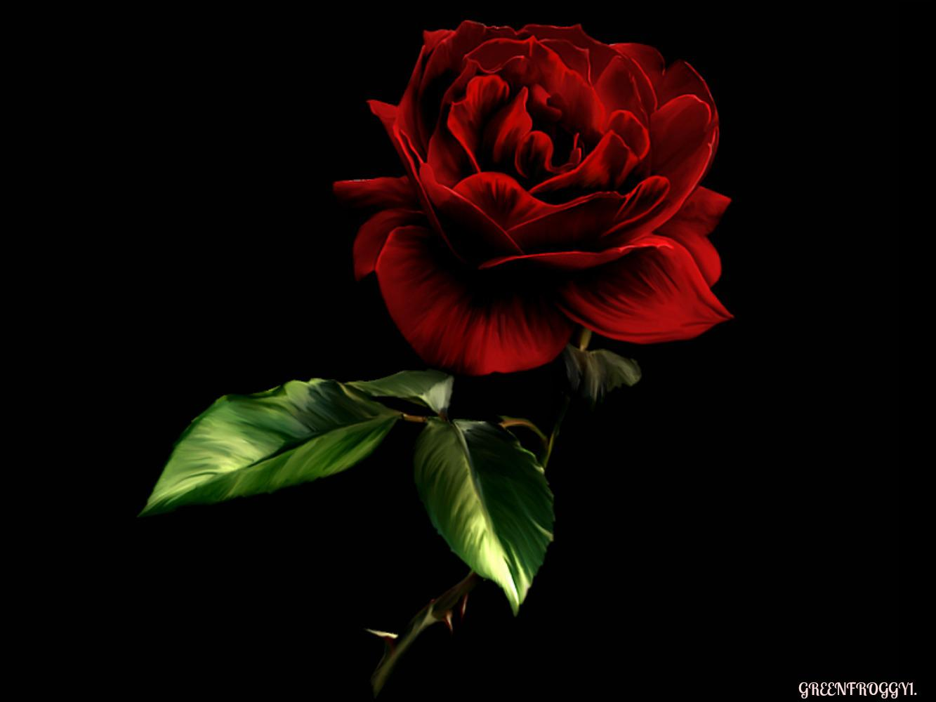 Red And Black Rose Wallpapers