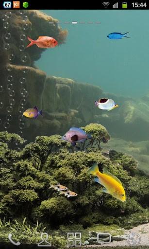 Screen aquarium is Aquarium Saver Aquarium 307x512