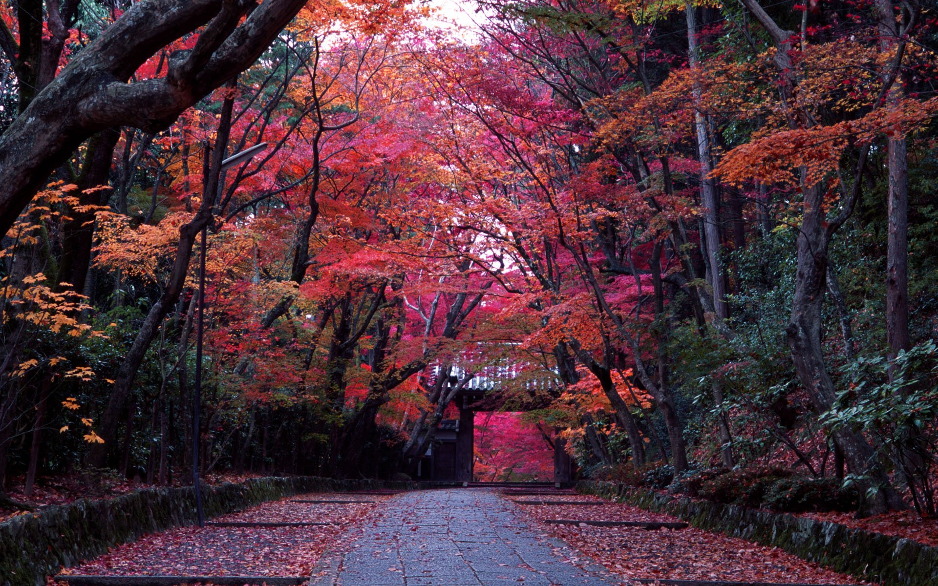 Kyoto Wallpapers High Quality Download 1920x1200
