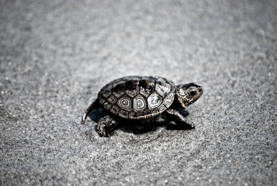 best photos 2 share 8 Cute pictures of baby turtles 570x382