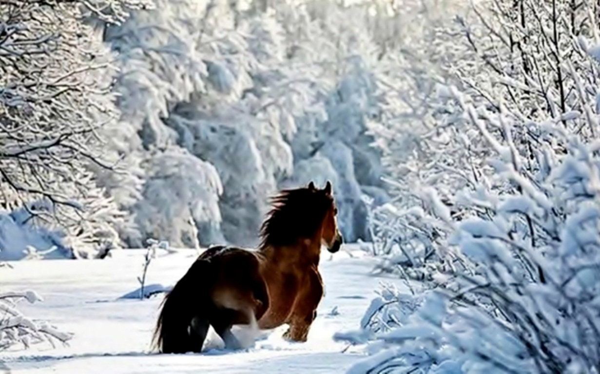 Winter horse wallpaper   ForWallpapercom 1231x768