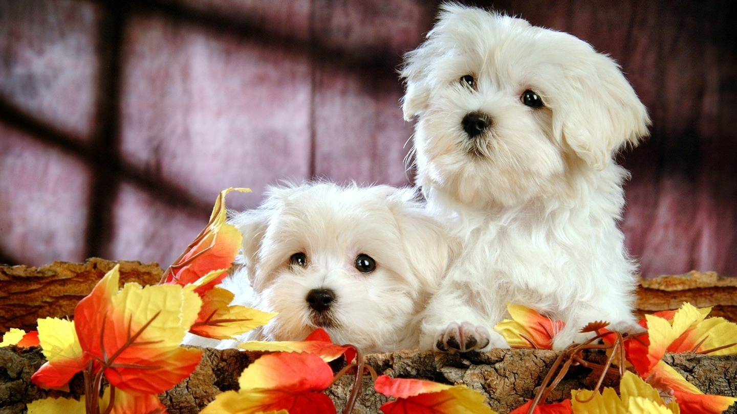 Cute Puppies Wallpapers   9444 1440x810