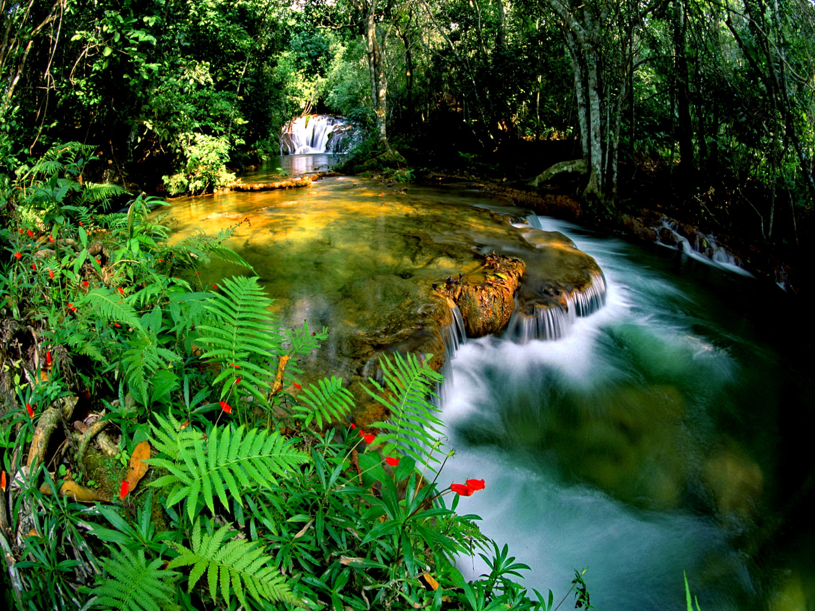 45 jungle wallpaper desktop on wallpapersafari - Desktop wallpaper 1600x1200 ...