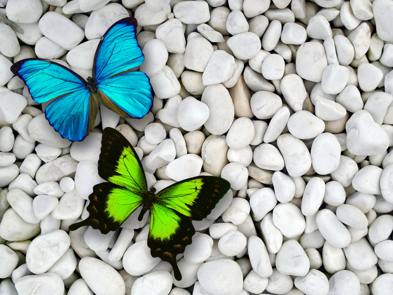 Blue green butterfly and stone contrast Wallpaper backgrounds 1600x1200